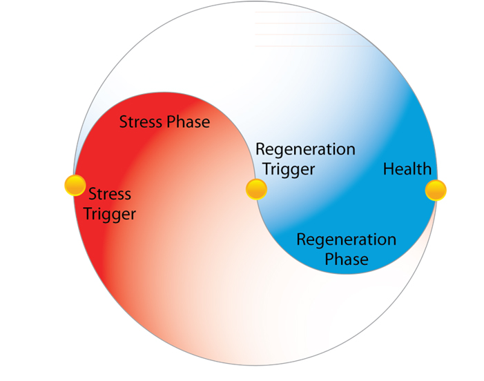 The Two Phases: Our Natural Rhythm of Health